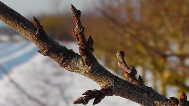 Apprendre à reconnaître les arbres avec les bourgeons @ Parking de l'arboretum à Virton (route de Rabais)