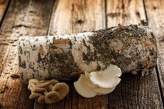 Cultiver des champignons sur bûches ? @ Maison du Parc naturel de Gaume, Château de Rossignol | Tintigny | Wallonie | Belgique