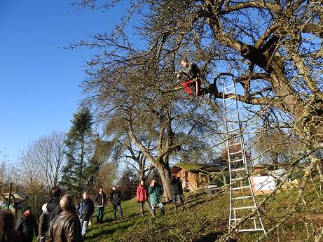 Entretenir, tailler et restaurer les vieux vergers @ Maison du Parc naturel de Gaume, Château de Rossignol | Tintigny | Wallonie | Belgique