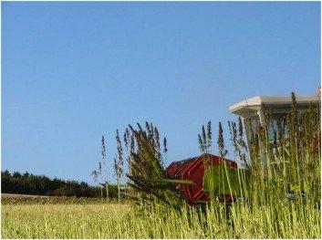 L'agriculture gaumaise