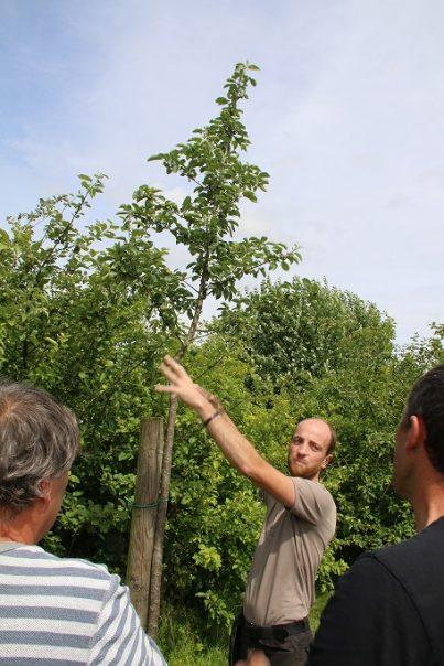 Taille de formation des jeunes fruitiers @ Rossignol