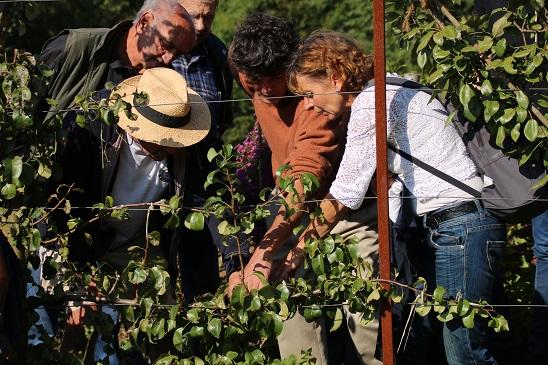 Techniques de base de formation et d'entretien des arbres en espaliers @ à Saint-Léger, au Ptit Loucèt