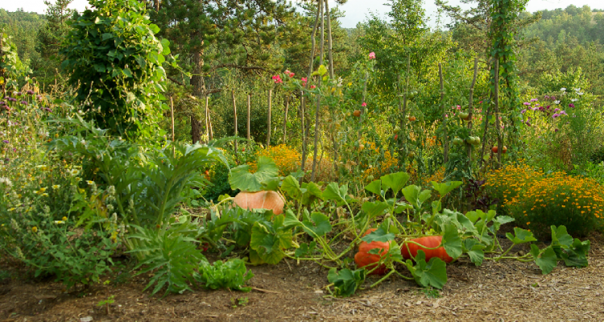 Portes ouvertes du Jardin en permaculture du Parc naturel de Gaume @ Maison du Parc naturel de Gaume, Château de Rossignol | Tintigny | Wallonie | Belgique